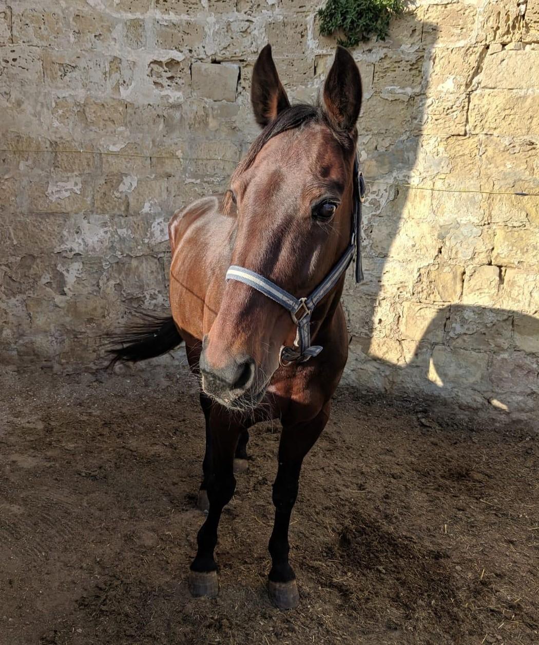 Kuva: RMJ Horse Rescue